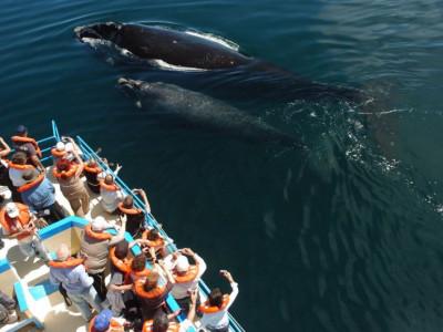 Viaje Submarino en Puerto Madryn
